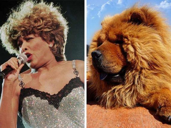 Tina Turner  chowchow Autors: Fosilija Slavenību dvīņi!