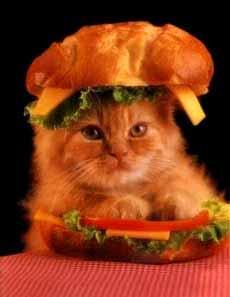 Ja kaķis vienmēr piezemējās uz... Autors: waterstar Vai vari atbildēt?