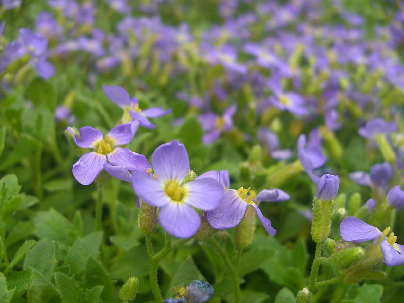 Mazās smukās puķītes Autors: anely4 Dārzā