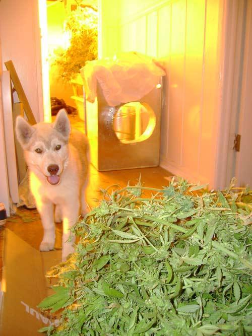 Autors: zalikoki Animals+weed