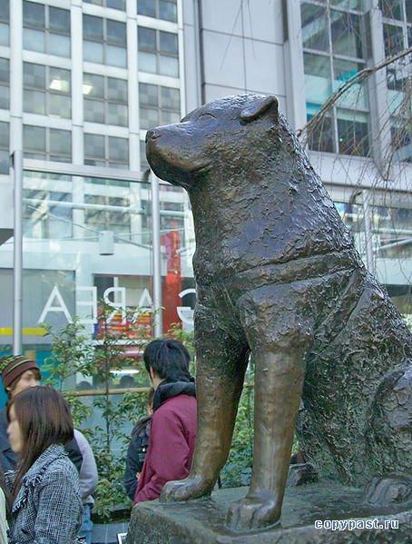 Tajā brīdī Hatiko jau bija... Autors: CrazyMaineCoonLover Hachiko: The World's Most Loyal Dog