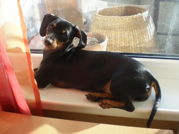 Saule pie mums ir lielā cieņā... Autors: DogPeople Taksis!