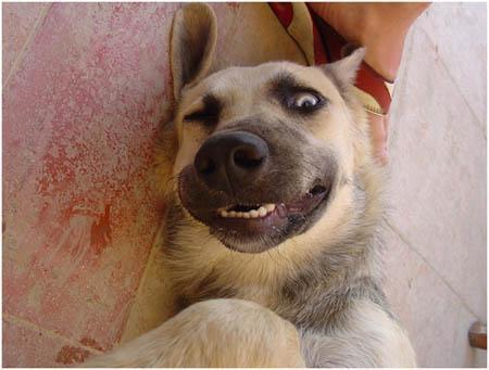 Autors: smileDD Smieklīgākās suņu sejas.