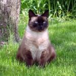 Viņu kaķis patiešām ir... Autors: Fosilija Viņš atgriezās.