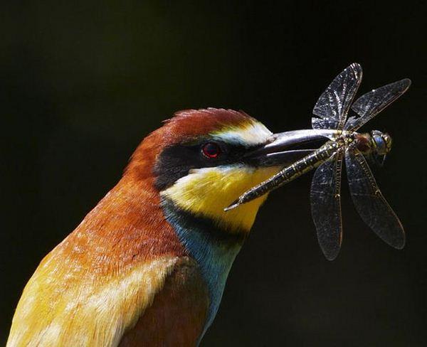 Autors: Asiņainā Mērija Skaistā daba.