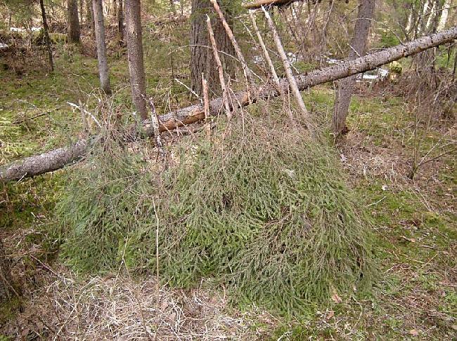 Ja jums ir paveicies atrodot... Autors: Dark Mist Kā uzbūvēt patvērumu mežā.