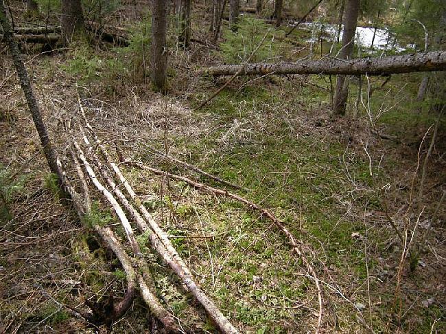 Tad būs japameklē pietiekoša... Autors: Dark Mist Kā uzbūvēt patvērumu mežā.