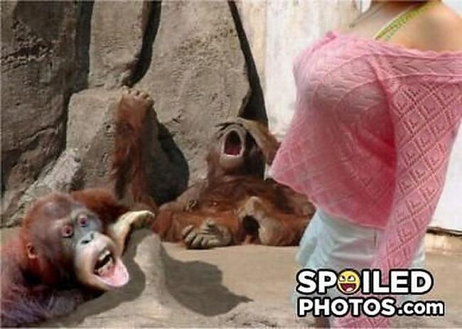 Autors: Elopis Sabojātās bildes. [Pacelts]