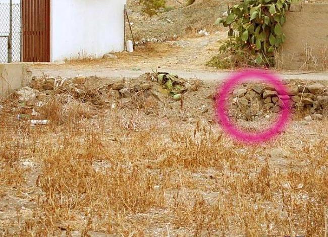 Autors: pofig Vari šeit atrast kaķi?