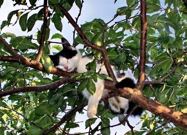 Autors: xxPYROxx Kaķi spēj gulēt visur!!!!!