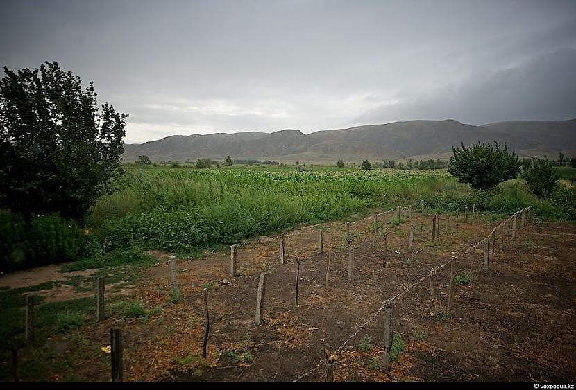 Tabkas sēklas parasti sēj... Autors: Džordžs no Džungłiem Kā izaudzē tabaku ?