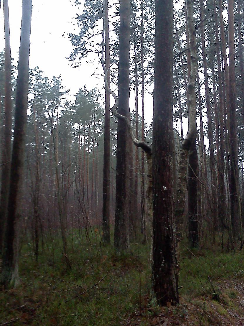 un mēs nonakam pie koka kurš... Autors: Xinjsh Pastaiga