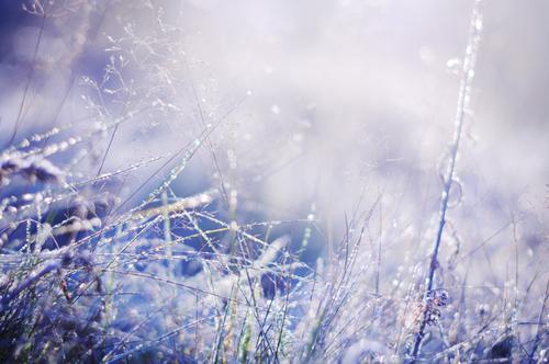 Autors: ZobenZivs Ziema/Vasara