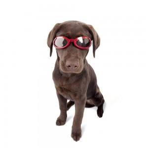 Kompānija kas izgudroja suņu... Autors: jimling2 10 dīvainākās biznesa idejas, kas atnesa miljonus