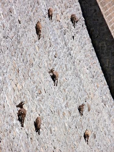 Čingo aizsprosts Alpu kazas... Autors: aģents 007 Skaisti attēli