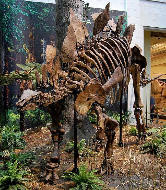 Stegozaurs Autors: sekers Skeletori 2