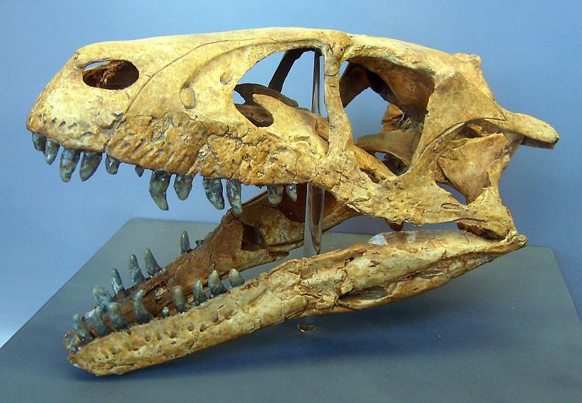 Dromaeozaurs Autors: sekers Skeletori 2