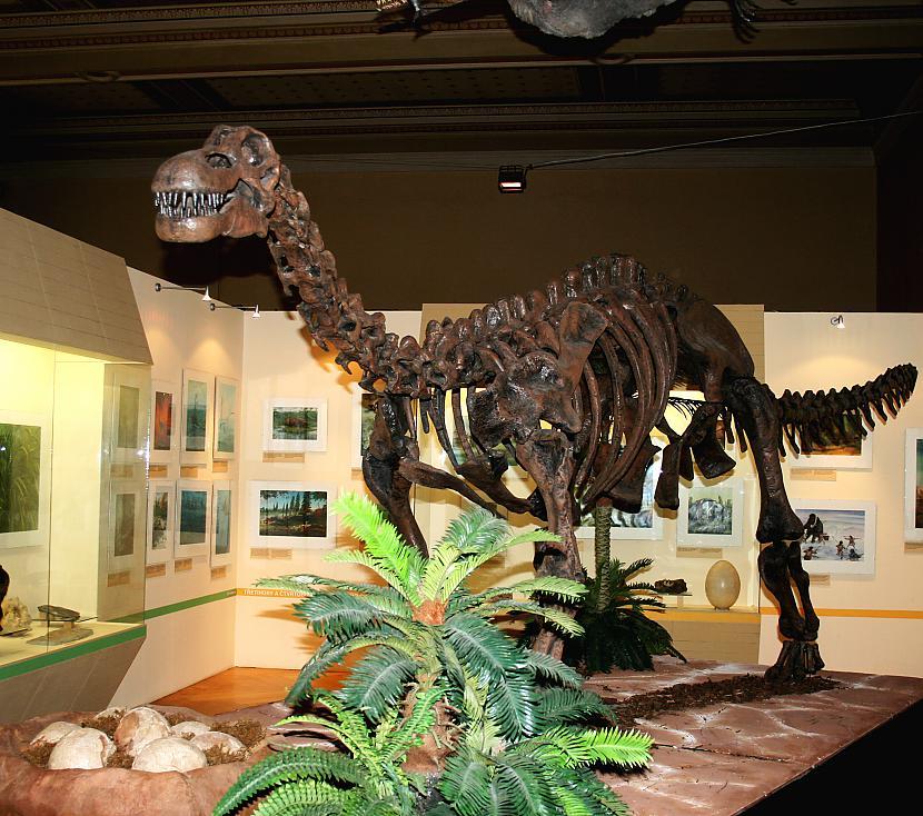 Epačtozaurs Autors: sekers Skeletori 2