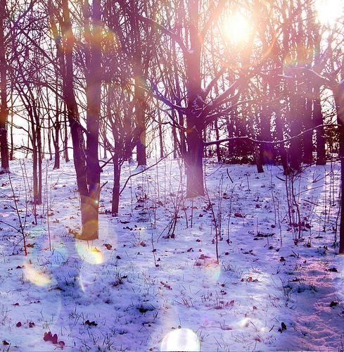 Autors: sunene Ziemīšu noskaņai