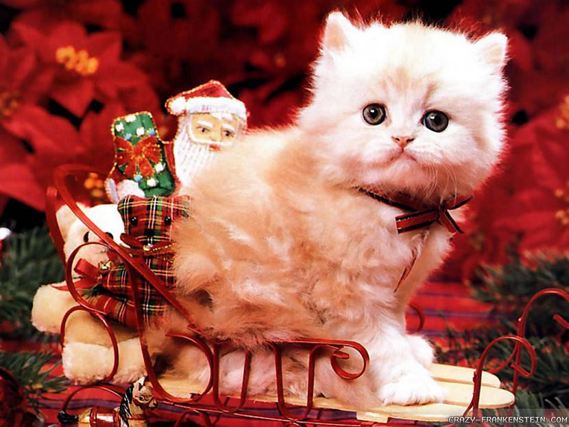 Autors: purplechicken Ziemassvētki
