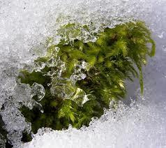 Tikko uzsnidzis sniegs 90  95 ... Autors: robiiic Interesanti fakti par sniegu! :)
