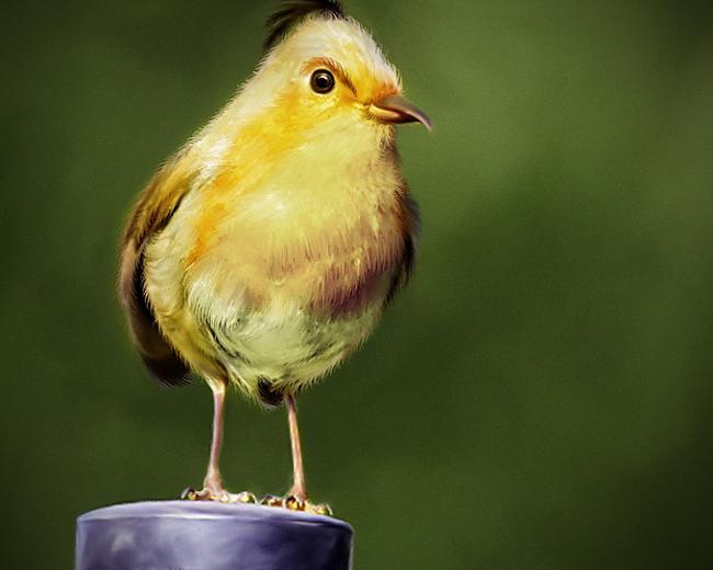 "Autors: Eiropa Angry Birds ""reālie"" putni"