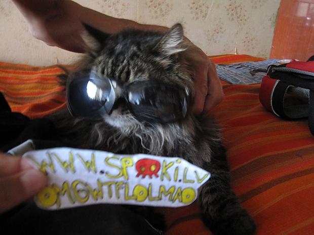 Autors: OMGWTFLOLMAO Mājdzīvnieks ar saulesbrillēm :D