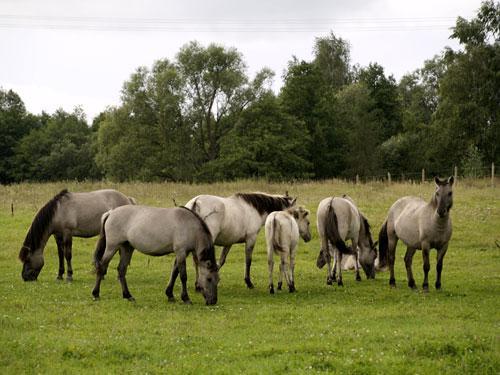 wild horses Autors: Lincho Some animals=)