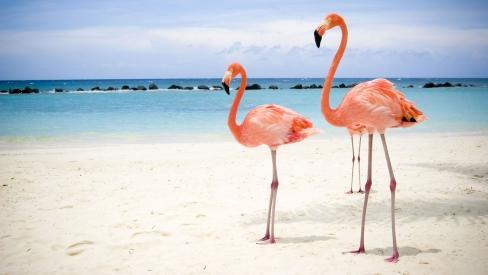 Flamingo ir vienīgā mūsdienās... Autors: kiksons 17 fakti par dzīvniekiem