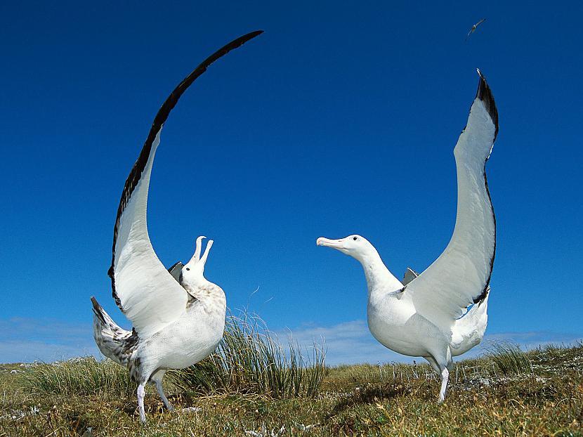 Pēc Starptautiskās dabas un... Autors: kiksons 17 fakti par dzīvniekiem