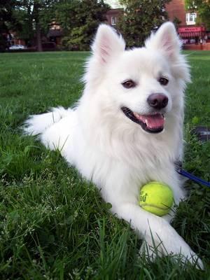 ļoti smuks suns Autors: angelus3D skaisti dzīvnieki 3 (sunīši)