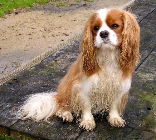 mīlīgs suns Autors: angelus3D skaisti dzīvnieki 3 (sunīši)
