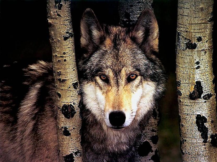 Tātad lieciet  ja patika Būšu... Autors: scary monster vilks
