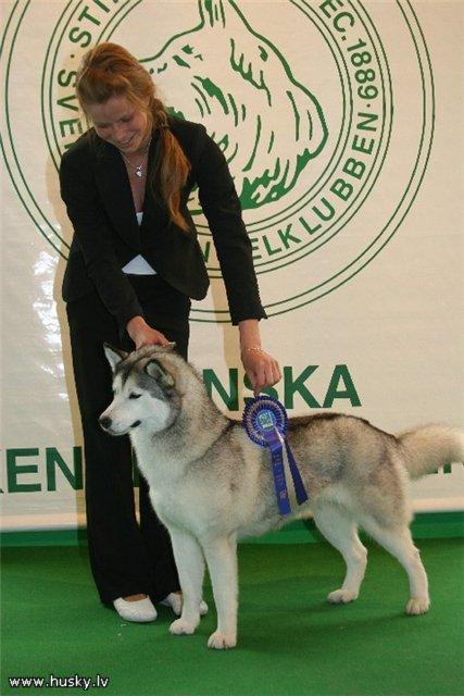 Haskijs Autors: slao11 Neatkarīgais čukču suns