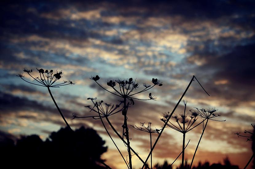 Autors: Fosilija Manas fotogrāfijas
