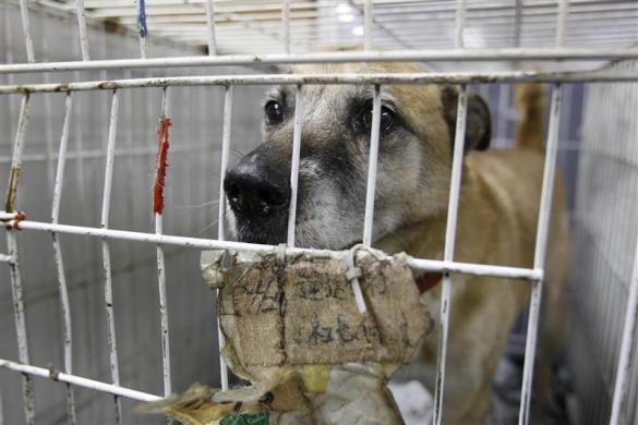 Tas vis notiek bīstamajā zonā... Autors: Jeims0n Pazudušie dzīvnieki no Fukushimas
