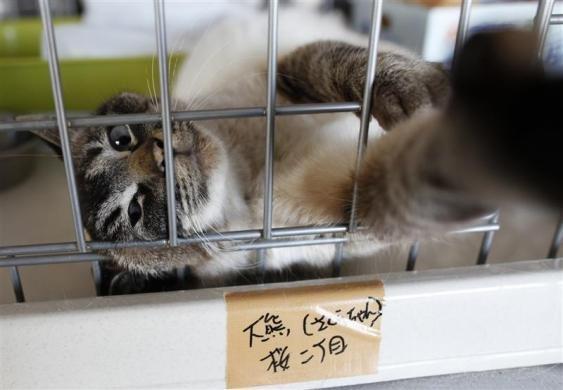Kaķis kas tika izglābts no... Autors: Jeims0n Pazudušie dzīvnieki no Fukushimas