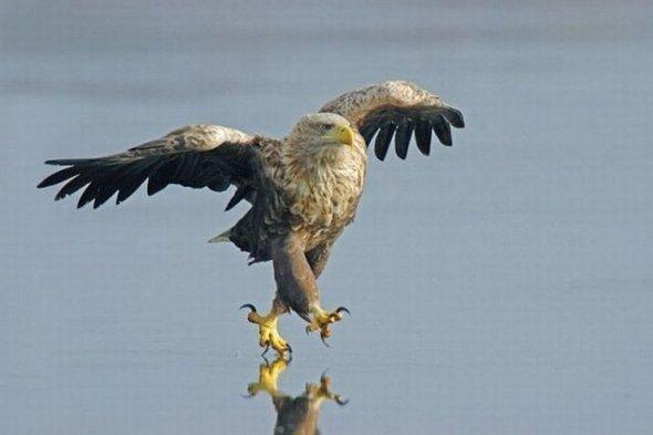 Autors: Aeroz 50 neticamas bildes bez fotošopa!