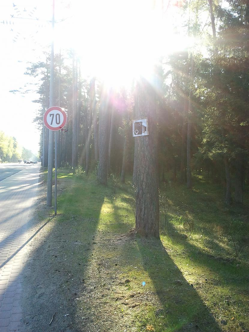 Jūrmala  mežs starp Dzintariem... Autors: BoyMan Cīņa pret fotoradariem!