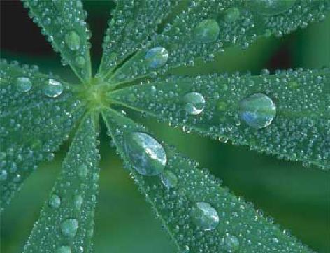 Kondensācija Koki un augu... Autors: MoonWolf Izdzīvošana: 3. daļa (Ūdens)