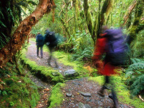 Ceļojums cauri Jaunzēlandes... Autors: Fosilija 10 Interesantas tūrisma vietas !!!