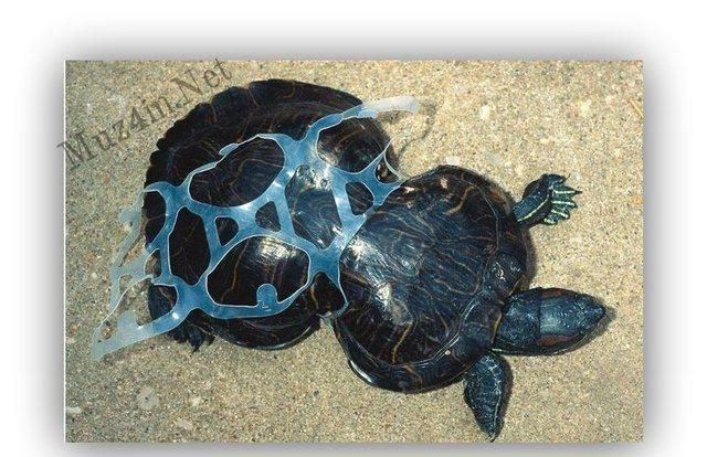 Izmetīsi atkritumus okeānā Autors: Fosilija Liec disku mikroviļņu krāsnī