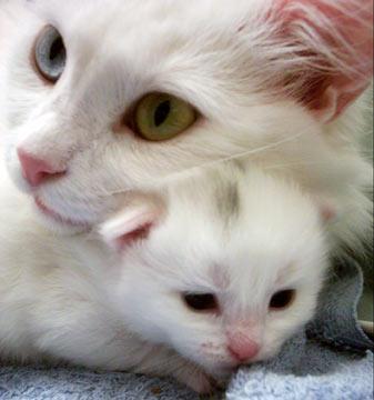 1 Autors: momoo999 kaķu milētājiem 2