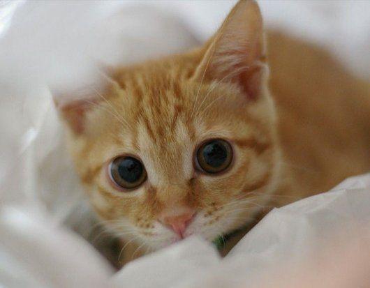 9 Autors: momoo999 kaķu milētājiem 2