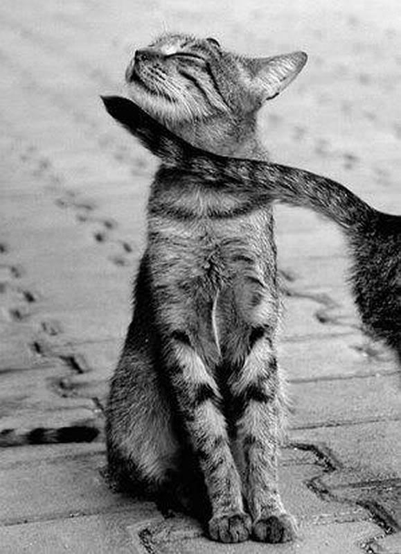 5 Autors: momoo999 kaķu milētājiem 2