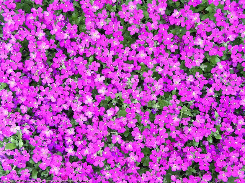 Krāsām ir nenoliedzams... Autors: eozz Ziedu ietekme uz sievietēm