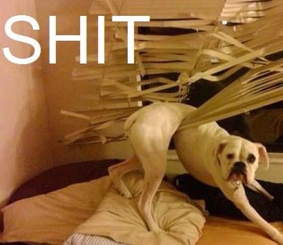 Autors: Freeway Funny Animal Fail