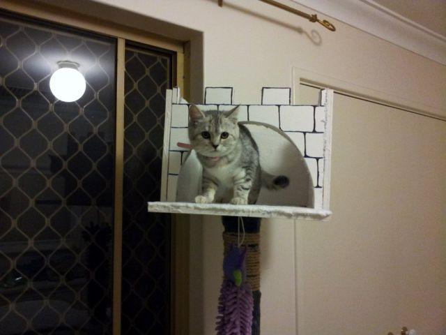 Кошачий домик своими руками - Самодельные.
