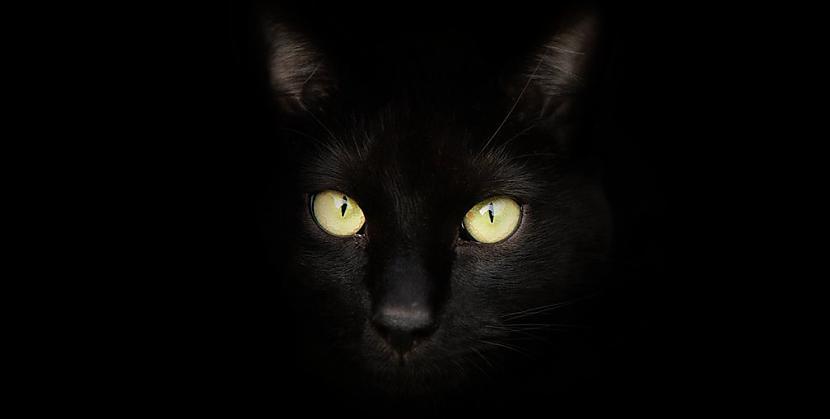 Melnie kaķiKad Helovīns sākās... Autors: Kinkažu Helovīna simboli un to nozīme