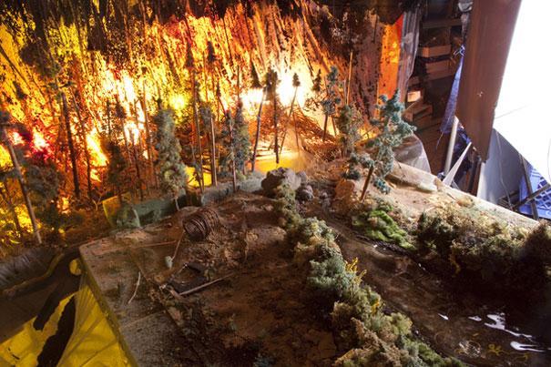 Meža ugunsgrēkinbsp Autors: norle2001 Kā veido dabas ainavas